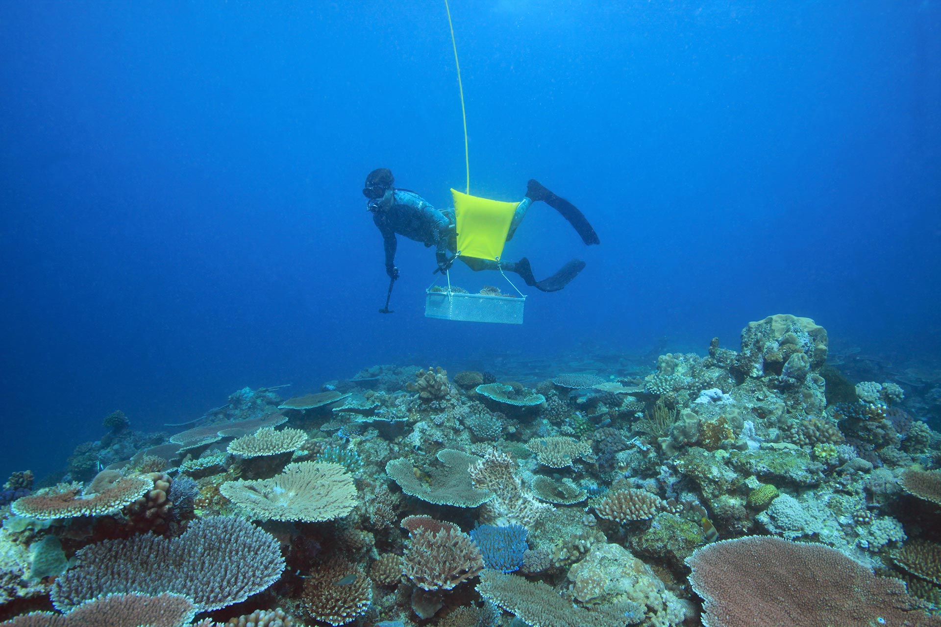 Coral Supply